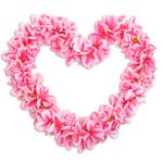 アロハプルメリア フラ衣装用レイ ピンク