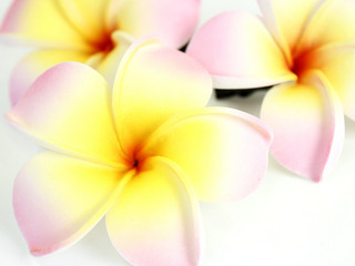 フラ衣装ヘアアクセサリー フラワークリップ プルメリア ピンクホワイト